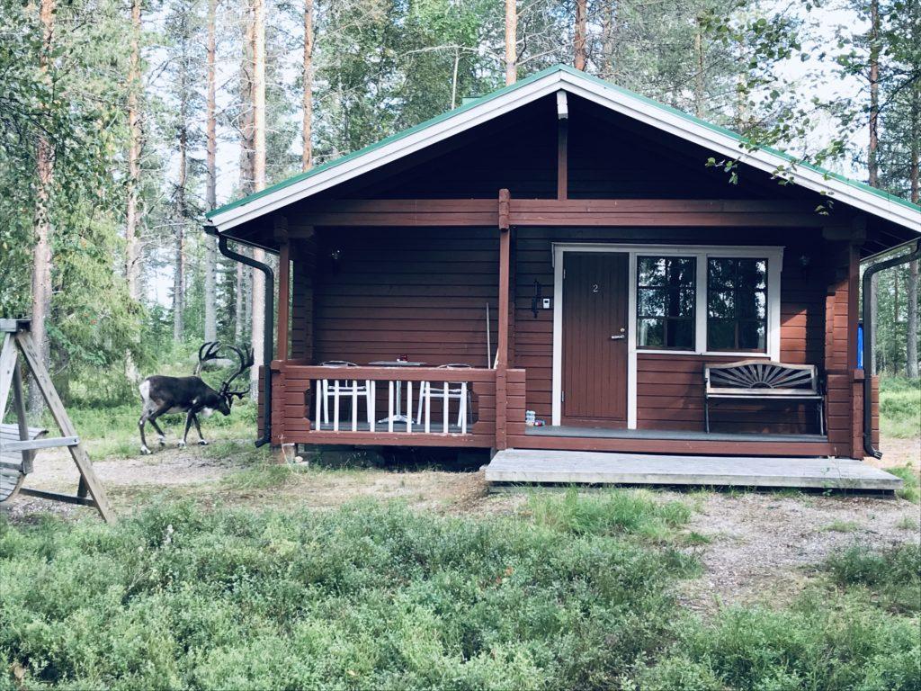 Gay/LGBTQ friendly ecological acommodation in Metsä kolo Finland, sateenkaariystävällinen Suomi yhteisön jäsen